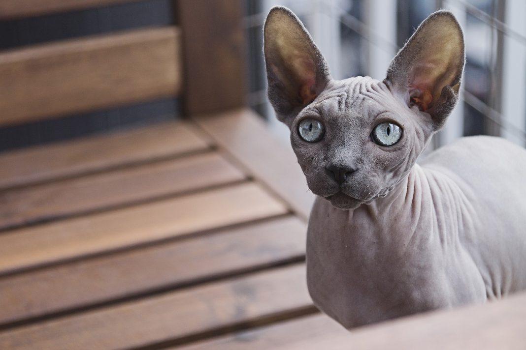Gatti e calciatori: un binomio perfetto